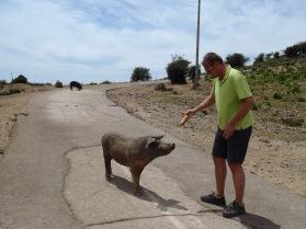 Der Dackel, der mit dem Schweinchen spricht