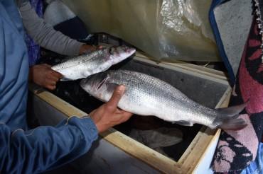 die Fischer zeigen uns den Fang des Tages