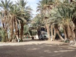 Der Campingplatz ist in einer riesigen Palmenoase gelegen