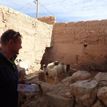 Im Hinterhof wohnen Esel, Schafe und Hendln